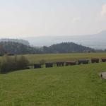 1-5-Blick-Landwirtschaftsausstellung